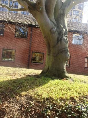 Heathroad_Tree