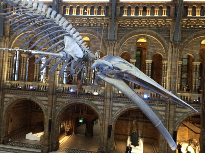Blue Whale Hintze Hall